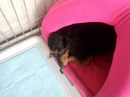 DSC_0569ルナ腕枕.jpg
