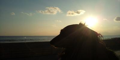 F1000001夕陽とルナ.jpg